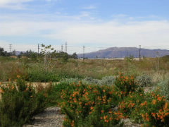Seven acres walking trail was developed with Santa Monica Conservancy