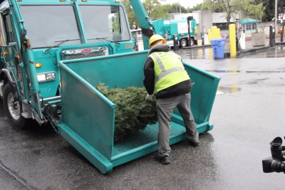 Christmas Tree Recycling photo for website 400px