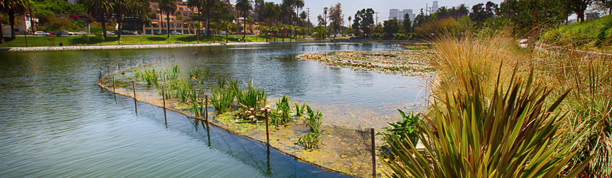 Echo Park Lake Image